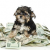 Five Cheapest States for Pet Insurance