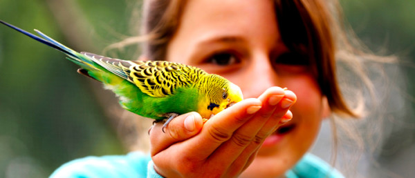 1460706688-7287-430-little-girl-with-budgie1