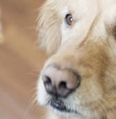Dog Food Recipes: Baking Healthy Treats for Your Pet