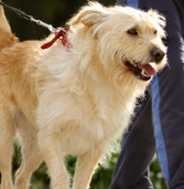 Leash Holding – Could it Really be Dangerous?
