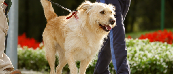 1463115817-4858-dog-walking-banner-image