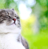 Obesity in Cats