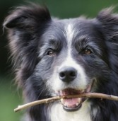 5 Questions to Ask Before Getting Your Next Pet