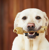 Feeding Your Dog Raw Meaty Bones: Is it safe?