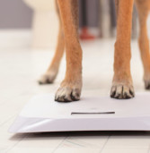 How Much Should My Dog Weigh?