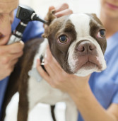 How to Decide If You Should Get Health Insurance for Your Pet