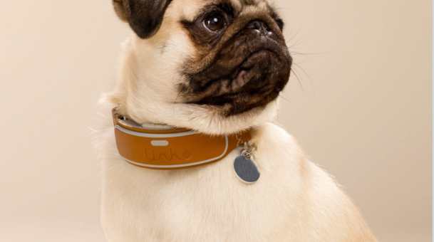 Pet Tech Wearable Market Will Soar to 2.5 billion in the Next 10 Years – Hello LINK AKC