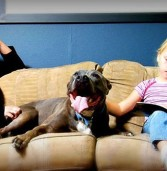Pit Proud: History Of The Pit Bull