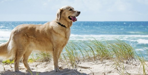 Things to Do with your Dog these School Holidays