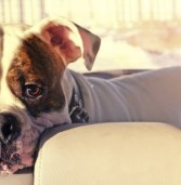 5 Tips for Travelling with your Pet