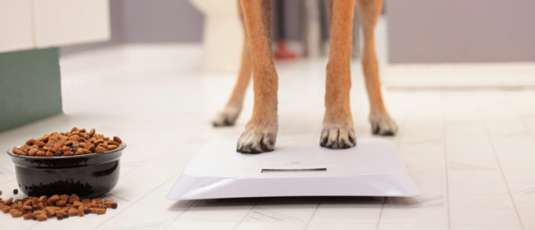 1477920958-4275-ow-much-should-my-dog-weigh1