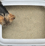 Why Does My Dog Eat Cat Poo?