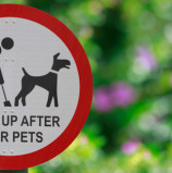 Why Does My Dog Eat Poo?