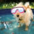 5 Summer Safety Tips Every Dog Owner Should Know