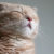 Acupuncture for Your Cat? What to Know About Alternative Medicine for Pets