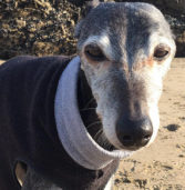 Hundreds Join Dog on Final Beach Walk Celebrating His Life