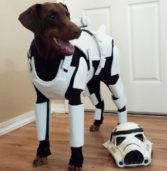 Isn't This Doggie A Little Short For A Stormtrooper?