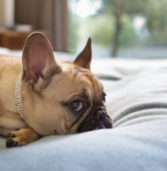 Everything You Need To Know About Ebola And Your Pets