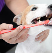 Essential Tips to Care for Your Pet's Teeth