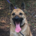 Caring For 12 Military Dogs Has Put This Kennel Owner $150,000 in Debt