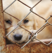 No Pet Store Puppies Day Reminds Us of the True Cost of Puppy Mills