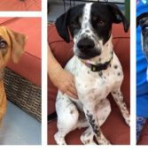 ESPN's Michelle Beadle Teams Up With Best Friends Animal Society