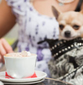 """Small """"Handbag"""" Dogs Are Being Surrendered to England's Shelters in Record Numbers"""