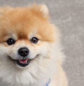 This NYC Apartment Building Wants Residents to Prove Their Dog's Breed With a DNA Test