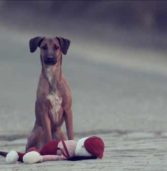 Hungarian Short Film Makes Powerful Statement About Abandoned Children and Pets