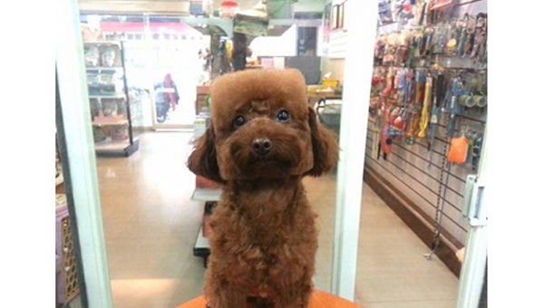 Look at This Dog With a Square Head