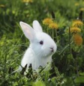 This Easter, remember: bunnies are for loving, not testing!