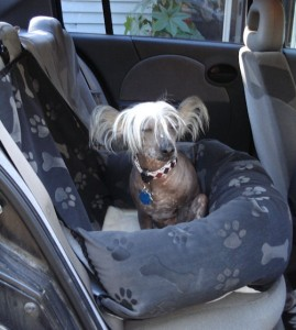 On the Road Again – Car Safety and Comfort for Dogs