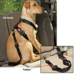 Vehicle Safety for Pets