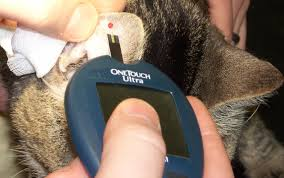 How to Prevent Diabetes in Your Cat by Learning from My Mistakes