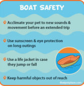 Water Safety Tips for Pet Owners