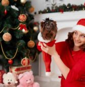 5 Poisonous Plants for Dogs to Watch Around the Holidays