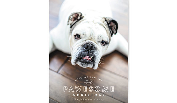 Minted Holiday Cards for Dog Lovers