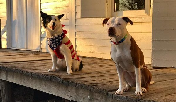 5 Dogs Who Ran for Political Office