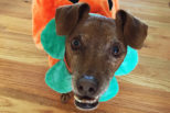 Dug Up at Dogster: 8 Spooktacular Halloween Costume Ideas for Your Dog