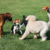 Could Your Pup Be Picking Up Diseases at Dog Events?