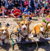 This Beachside Corgi Convention Is Proof that Heaven Is a Place on Earth
