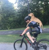 Dog Hit By Car Gets Help and a New Home Thanks to Biker Who Carried Injured Canine on His Back