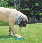 Dogs Meet Sprinklers