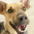 April 30 is National Adopt a Shelter Pet Day