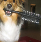 Professional Pet Groomers & Stylists Alliance Announces Shared Safety and Sanitation Standards for Pet Grooming