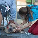Veterinarians take their Oath in Action to underserved communities across the U.S. for Make a Difference Day