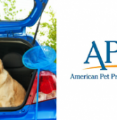 Survey Says: More Owners Than Ever are Traveling with their Dogs