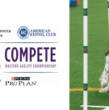 """Westminster Kennel Club & American Kennel Club Set to Take Over NYC with """"Meet & Compete"""""""