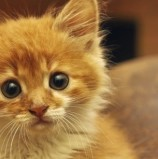 Hachoo! What is Cat Flu and How Do You Treat it?