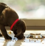 Why you shouldn't feed your Pet a Supermarket Diet